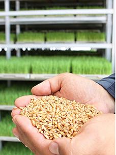 한국인의 밥심! CJ프레시웨이와 지역 농가 ''벼 계약재배''로 지켜나가요!